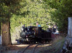 #Berkeley, CA- Steam trains in Tilden Park.