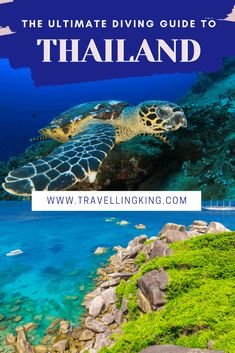 This is the ultimate diving guide to Thailand, written by divers for divers, with the hottest destinations for everyone from novice to professional. Phuket Travel, Thailand Travel Guide, Bangkok Travel, Visit Thailand, Croatia Travel, Asia Travel, Bangkok Thailand, Hawaii Travel, Italy Travel