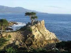 Icon of 17 Mile Drive, Monterey CA