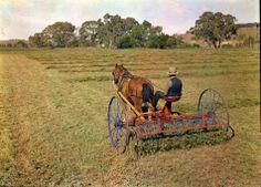 ... Horsedrawn 9-Foot Seed Dump Hay Rake (Lucerne), 1940 - Museum Victoria