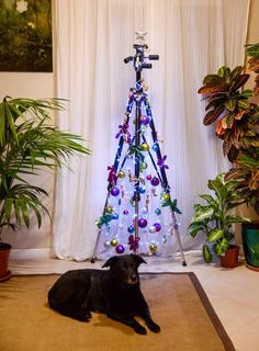 Photographer's christmas tree