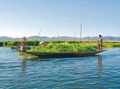 Beeindruckend sind die schwimmenden Gärten des Inle-See, in denen beispielsweise Tomaten, Bohnen und Blumen wachsen.