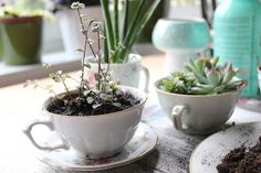 DIY Teacup Planter by Plutomeisje, via Flickr