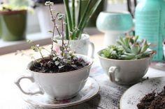 DIY Teacup Planter by Plutomeisje, via Flickr