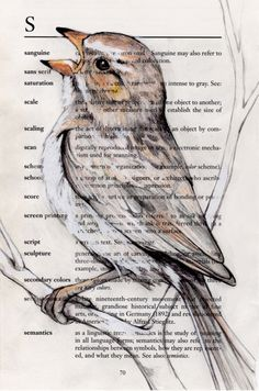S is for Sparrow by Paula Swisher