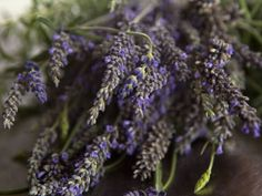 Eat purple: English lavender is perfect for cooking, both savoury and sweet. Newspaper article about culinary lavender.