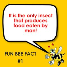 Fun Bee Fact #1 It is the only insect that produces food eaten by man!