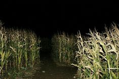 why is it always a cornfield? American Gothic, American Horror Story, John Wilson, Behind Blue Eyes, Gothic Aesthetic, Over The Garden Wall, Southern Gothic, Weird Dreams, Angst