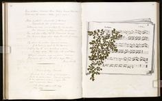 Beautiful Commonplace Books By Lewis Carroll, Nancy Cunard and More (Photos) - The Daily Beast Nancy Cunard, Steven Johnson, Men Of Letters, Commonplace Book, Lewis Carroll, Writing Quotes, Album, Altered Books, More Photos