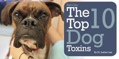 The Top 10 Dog Toxins | Dangerous Foods for Your Dog