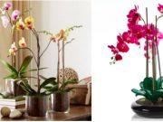 Máte doma orchideje, ale nedaří se Vám je udržet delší dobu při životě? Pak se podívejte na těchto pár triků!