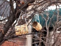 Toilet Roll Bird Feeder Craft
