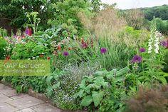 "Képtalálat a következőre: ""Salvia sclarea in garden"""