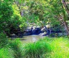 Where is it: Kondalilla Falls Road, Montville           Why we love it: A walk through beautiful rainforest that leads to a really nice waterhole and impressive waterfall!                 Tell me more: About 1 and a half - 2 hours' drive north from Brisbane