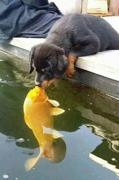 Fish kiss.