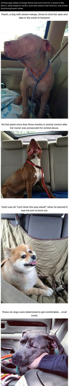 Photos of dogs taken after leaving the shelter and getting in the car..(20 pics) | High Octane Humor