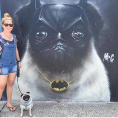 This is pugging awesome.Please follow @calithepug ! #pugsofinstagram #pugs #pug…