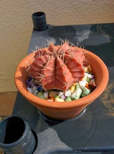 Cactus and Succulents 711 Flower Bookey, Flower Film, Flower Names, Cactus Flower, Flower Pots, Cacti And Succulents, Planting Succulents, Garden Plants, Planting Flowers