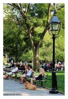 Washington Square Park, New York City Copyright: Andre Bonavita