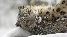 Bronx Zoo: Saving Wildlife and Wild Places