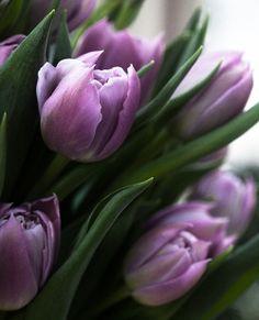 love tulips, love purple and green!