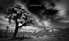 California. Joshua Tree National Park.  #California #joshuatree