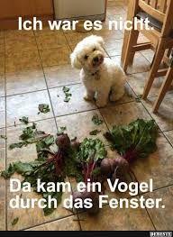 Bildergebnis Für Lustige Hunde Bilder Mit Spruch Humor Pinterest