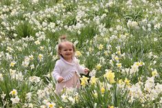 kyleigh grace daffodil farm in litchfield ct  spring 2014