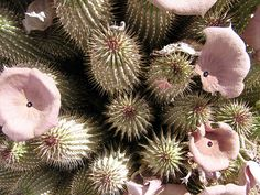 No diet links Please!People should take more hoodia pictures than hodia extract!And also: If you spend less money on hoodia products you can spend more on good and healthy food,Or, even better, eat less junk food and save the money for a trip to take some nice hoodia pictures!