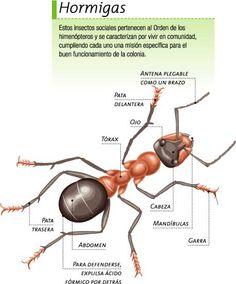 fichas insectos para niños - Buscar con Google