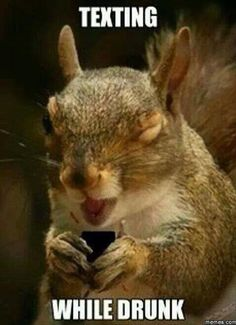*always lol. Hilarious Pictures of the day pics- Texting While Drunk Squirrel Drunk Squirrel, Cute Squirrel, Squirrels, Squirrel Memes, Happy Squirrel, Funny Animal Pictures, Funny Animals, Cute Animals, Funniest Pictures