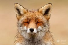 """They smell the fresh air, feel the warmth of the sun on their fur, close their eyes and then it's a matter of just being there'"" - photographer Roeselien Raimond"