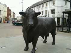 The iconic Hereford bull