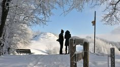 Zürcher Oberland (Zurich Region) - It is a recreational paradise – perfect for hiking, mountain-biking and walking. In winter, numerous ski lifts, cross-country skiing trails and toboggan runs make it a Mecca for winter sports enthusiasts.