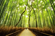 Bamboo Forest Trail in Japan.