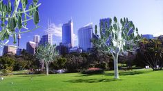 L'Arbre à vent dans la ville verte de demain