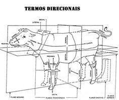 # Principios de Anatomia Veterinária: Definições, planos anatômicos e termos direcionais - Daiane Rosa