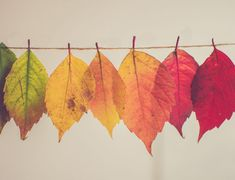 Volunteer Management Tips: Mindset Matters - Tobi Johnson & Associates Feng Shui, Happy Sabbath, Change Is Coming, Paint By Number, Cool Diy, Autumn Leaves, Fallen Leaves, Autumn Fall, Printables