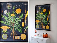 Vintage botanical pull down chart school chart by MightyVintage