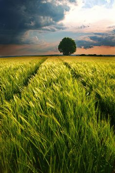 Stormy Skies and Wide Open Fields | Bavaria, Germany | by Dennis' Photography, via Flickr