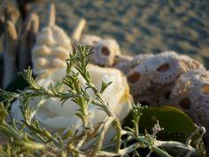 LA BUCA DELLE FATE: Primavera a mare