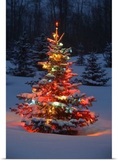 Carson Ganci Poster Print Wall Art Print entitled Christmas Tree With Lights Outdoors In The Forest, None