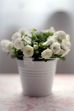 White flowers, simple and pretty My Flower, Fresh Flowers, Flower Power, Beautiful Flowers, Simply Beautiful, Beautiful Things, White Roses, White Flowers, Mini Roses