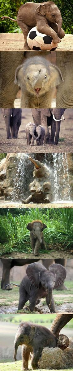 Baby elephants playing! Nothing cuter!