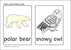 Polar animal flash cards (SB7726) - SparkleBox