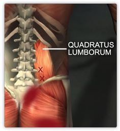 Spa Kamper note: This is a great site full of wonderful info. Not everything is in my scope of practice but it good to keep up with what other professionals are doing for my clients. The Manual Therapist: Technique Highlight: Quadratus Lumborum Release