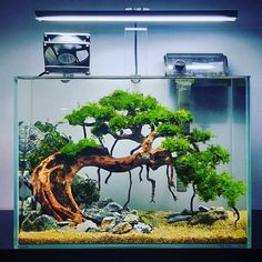 Underwater bonsai tree❓ YES❗️ Like this one created by indonesian aquascaper Nickson Marpaung 🇮🇩. Planted Aquarium, Aquarium Aquascape, Aquarium Landscape, Nature Aquarium, Aquarium Fish Tank, Aquascaping Plants, Betta Fish Tank, Aquarium Design, Fish Tank Themes