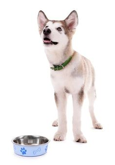 Top 20 Best Puppy Foods | MySweetPuppy.net
