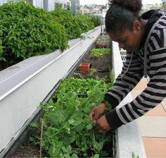 C mo hacer un huerto en casa h galoustedmismo jardin - Como hacer un jardin en casa ...