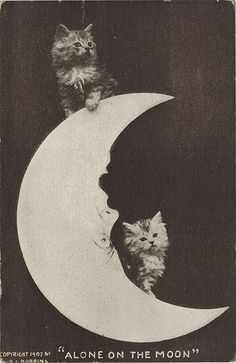 """Two Kittens on an Upside Down Moon - Printed Postcard 1907 """"alone on the moon"""""""